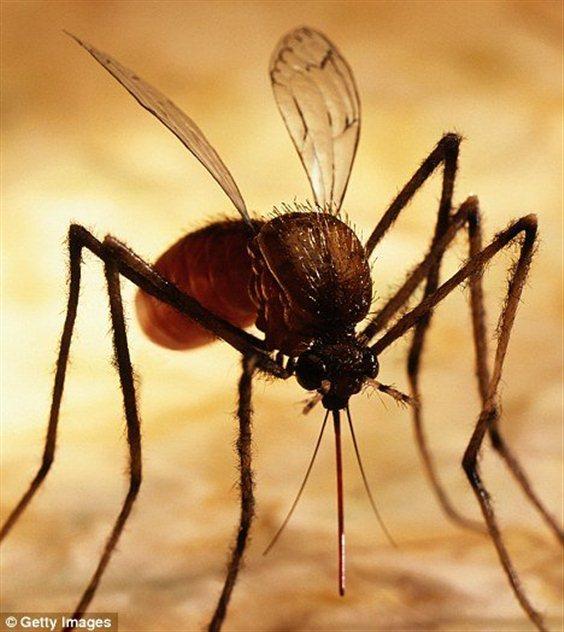 Чем лечить укусы насекомых фото