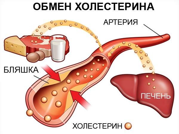 тмин и холестерин
