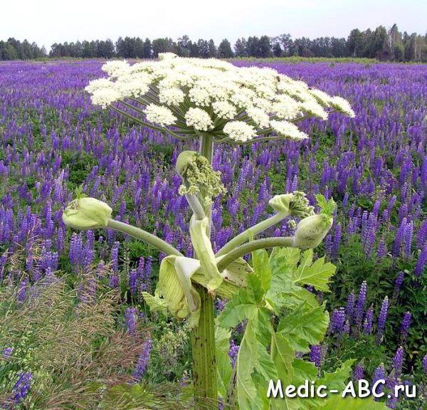 травы от аллергии для детей отзывы