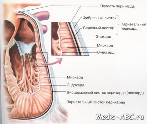 Дисметаболические изменения миокарда