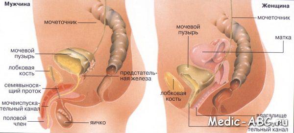Причины небактериального цистита у женщин