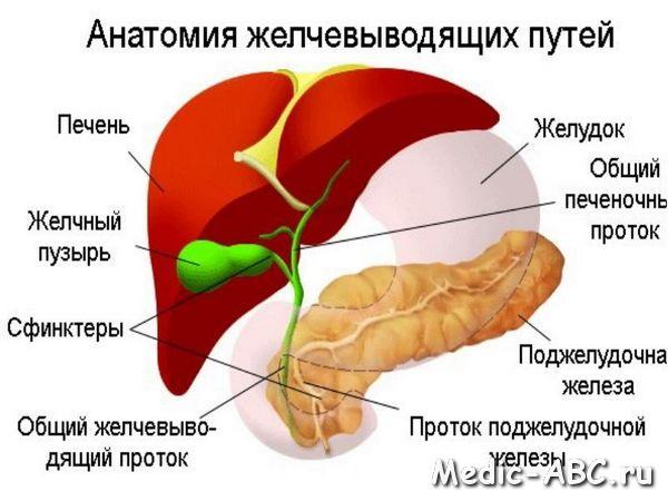 Как лечить дискинезию желчевыводящих путей