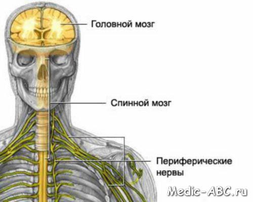 Как лечить нервную систему