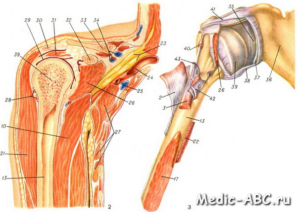 Плечевой сустав вправить компресс с новокаином от боли в суставах