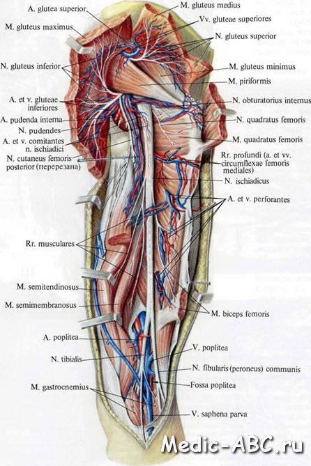 Как лечить ущемление седалищного нерва