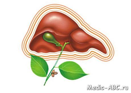 Как лечить заболевания печени