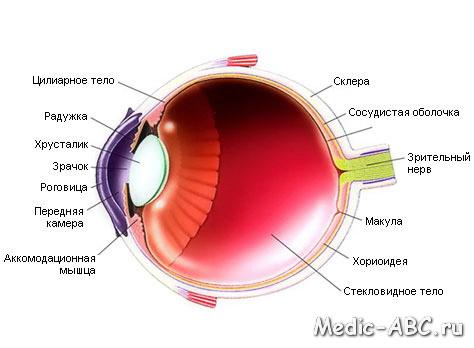 Основные симптомы глазных болезней
