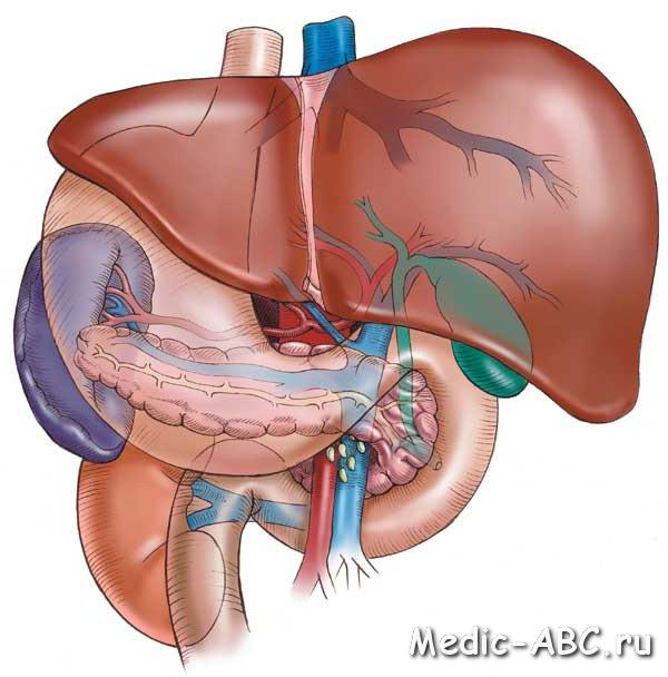 Симптомы заболевания печени и желчного пузыря